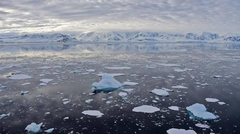 Des scientifiques ont découvert accidentellement une forme de vie inattendue dans les profondeurs obscures et glaciales de l'Antarctique, dans une région particulièrement inhospitalière.