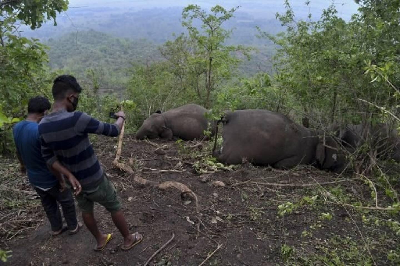 18 éléphants ont été découverts morts. Ils auraient pu être foudroyés mais des doutes subsistent.