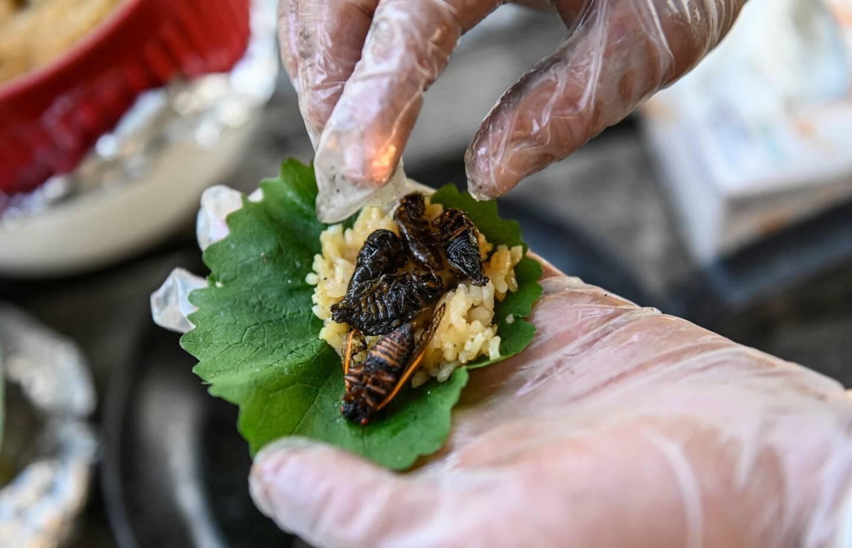 Un sushi à la cigale, illustration.