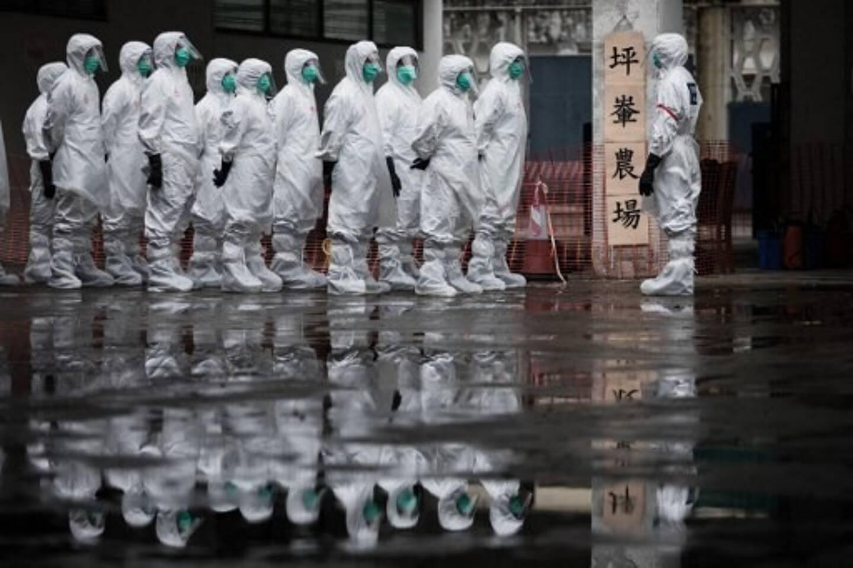 Un premier cas humain de grippe aviaire H10N3 a été rapporté par la Chine mardi 1er juin 2021.