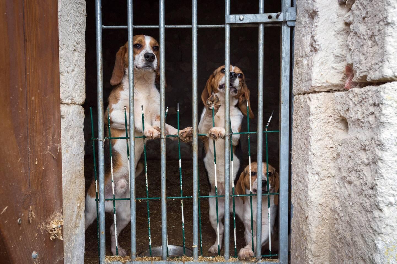Sauvetage de chiens par la fondation 30 millions d'amis.