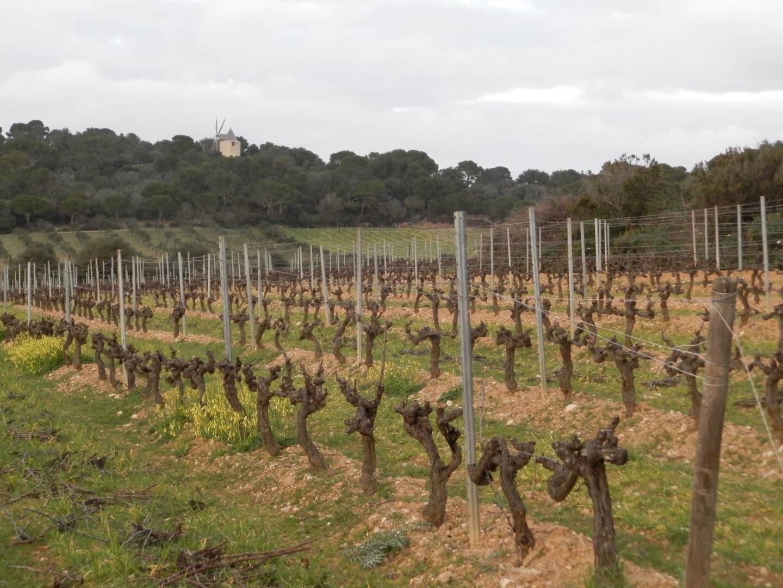 L'ensemble ainsi constitué devient la première exploitation vinicole de l'île de Porquerolles, sans compter 5 ha d'oliviers et 35 ha divers à mettre en valeur, soit un total de 80 ha gérés par Chanel.