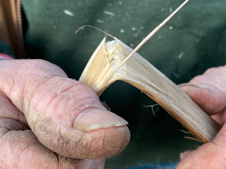 Le châtaignier et le noisetier sont des bois fibreux qui restent souples.