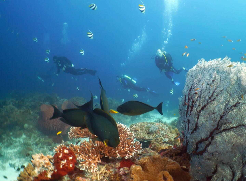 La principauté de Monaco copréside en ce moment l'ICRI, l'International Coral Reef Initiative, avec l'Australie et l'Indonésie. Le but, rendre en mars prochain un état des lieux mondial de la santé des récifs coralliens. Ici le parc naturel des récifs de Tubbataha aux Philippines, un atoll corallien classé au patrimoine mondial de l'Unesco.