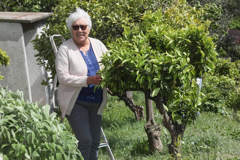 Renée Pugi, propriétaire de bigaradiers à Vallauris, n'a jamais manqué une récolte.