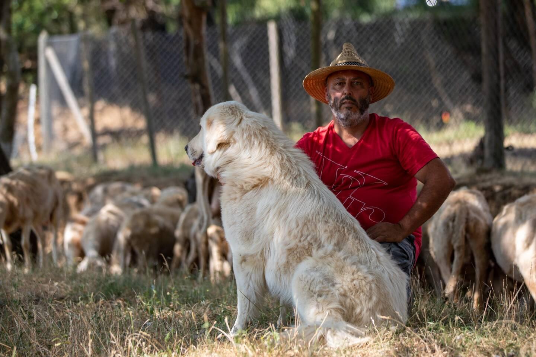 Michel Casanada avec un de ses chiens gardien de troupeau.