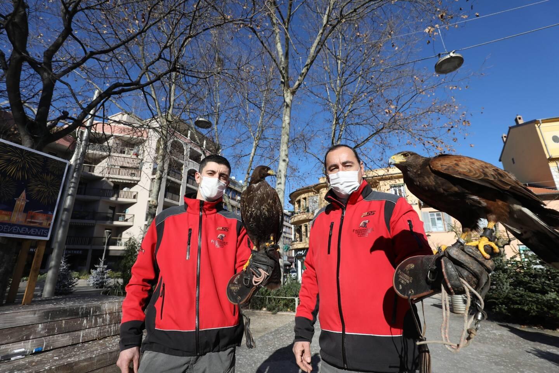 Gianni di Cioccio et Christophe Puzin présentant deux buses de Harris, hier. Avant-hier, leurs rapaces ont effarouché les quelque 200 perruches qui souillent les bancs et les pavés de leurs déjections depuis leur platane-dortoir.
