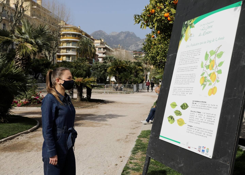 Jusqu'à dimanche inclus, le public pourra déambuler dans les jardins Biovès pour découvrir une exposition en plein air sur l'histoire du citron de Menton.