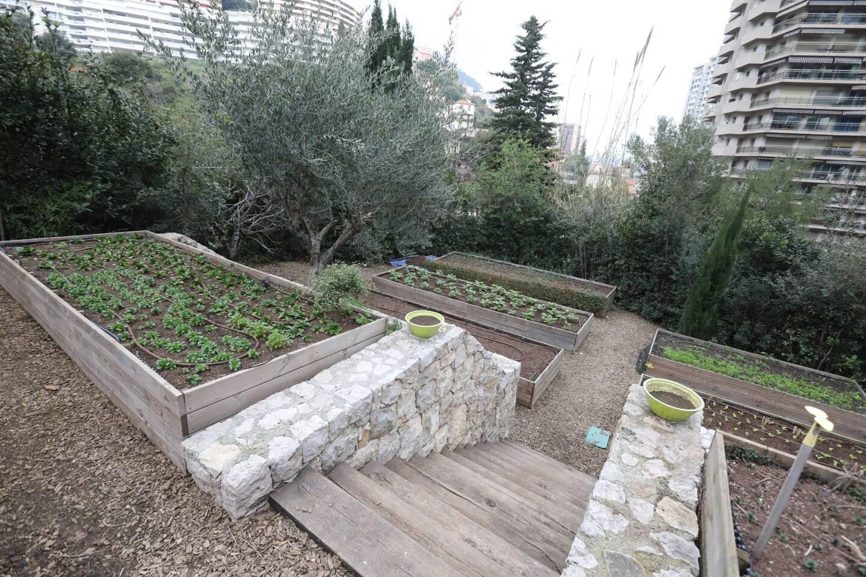 L'hiver n'étant pas la saison préférée des potagers, les semis sont surtout consacrés aux salades et aux légumes racines en ce moment, en attendant les plants estivaux.