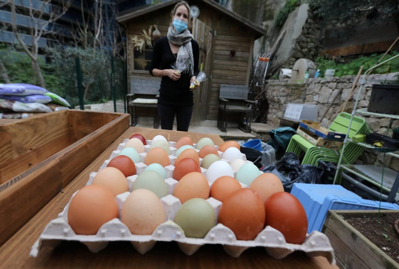 La production d'œufs multicolores est due à une grande variété de poules différentes.
