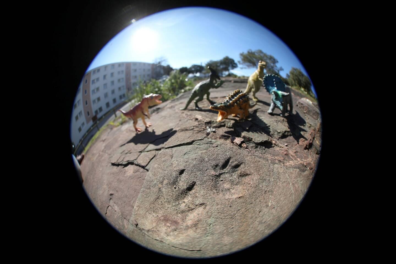 Sur les traces des dinosaures varois...