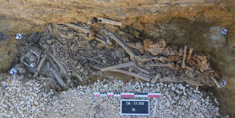 """C'est dans une tranchée réalisée lors de travaux sur le réseau d'assainissement qu'ont été découverts trente et un squelettes enchevêtrés, """"certains dans des positions atypiques"""", attestant d'une """"sépulture de catastrophe""""."""