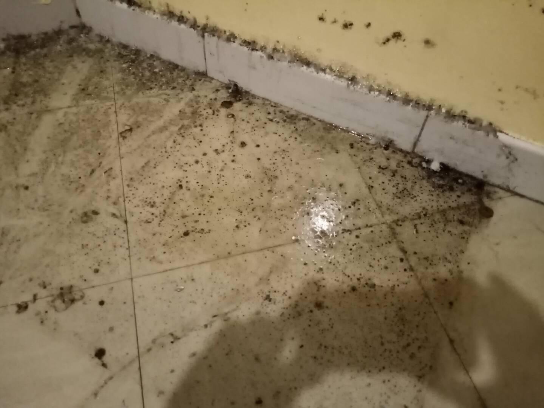 L'appartement qu'elles occupent à Toulon est rempli de moisissures. depuis plusieurs mois.
