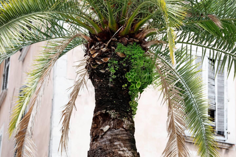 Des végétaux se développent même sur les arbres.