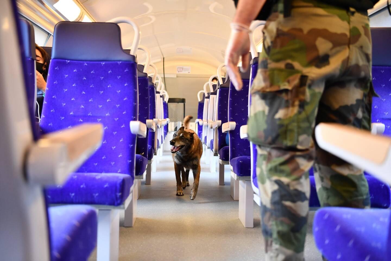 Le chien-gendarme Fast, 11 ans, en plein travail