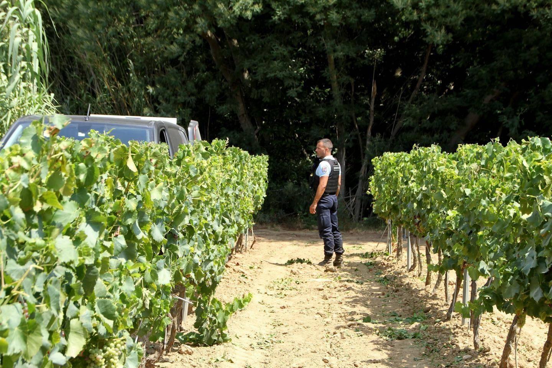 Découverte d'un corps dans les vignes