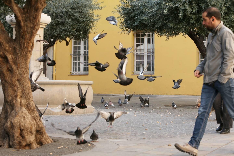 À Cogolin, la prolifération des pigeons agace nombre d'administrés.