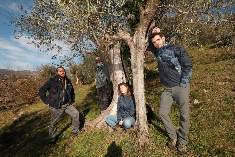 Les quatre amis ont une centaine d'arbres à entretenir