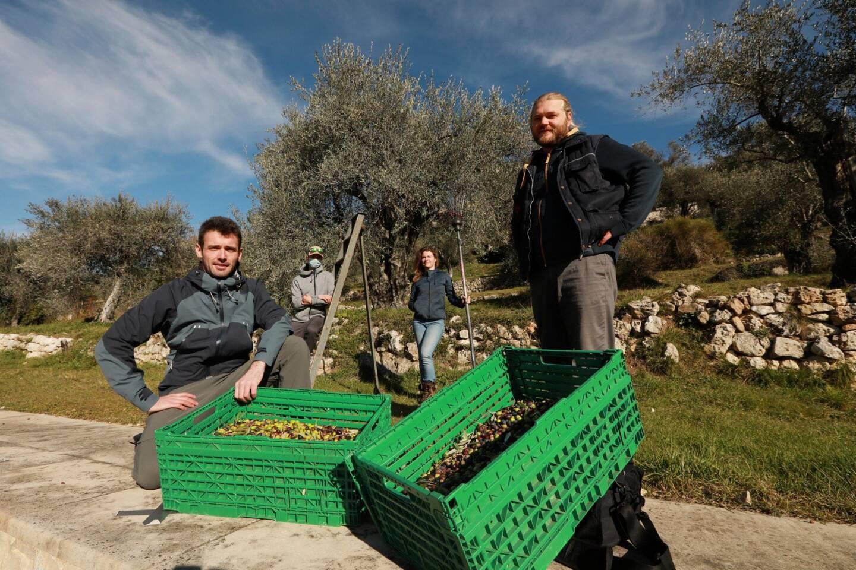 Première récolte de 450 kg pour les quatre membres d'Amista