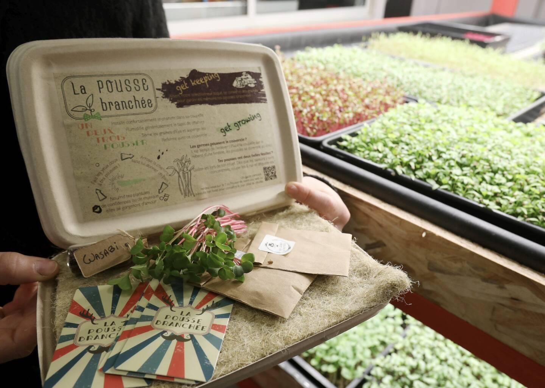 """Une boîte par mois, avec un thème, une graine """"à faire pousser dans son salon"""" et une recette d'un grand chef. C'est la nouvelle idée très green de La Pousseraie, startup niçoise."""