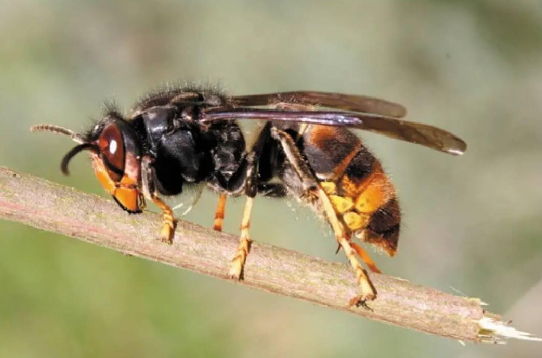 18 millions d'abeilles réparties dans 450 ruches vont trouver refuge sur des terrains éloignés des pesticides pour les aider à passer l'hiver