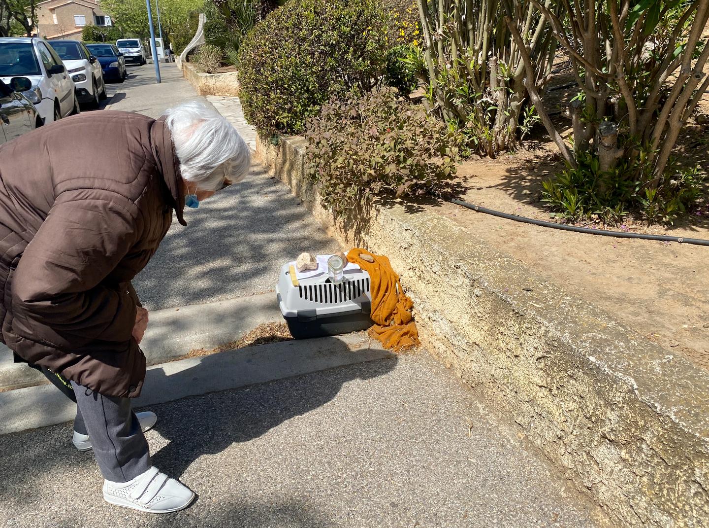 Pendant plusieurs jours, la caisse installée pour attraper le rongeur a intrigué les passants de tous âges.