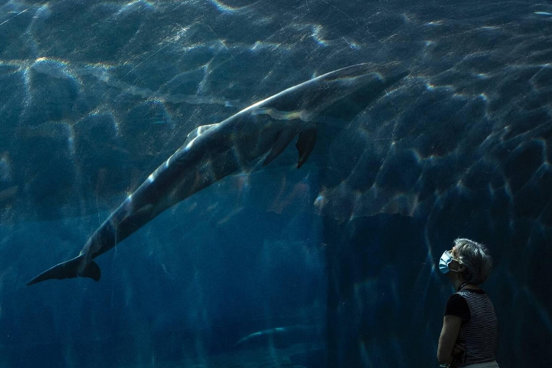 Une femme masquée regarde un dauphin dans un aquarium à Gênes (Italie), le 22 mai 2020
