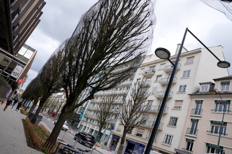 Des arbres photographiés sur une avenue à Rennes, le 26 mars 2021