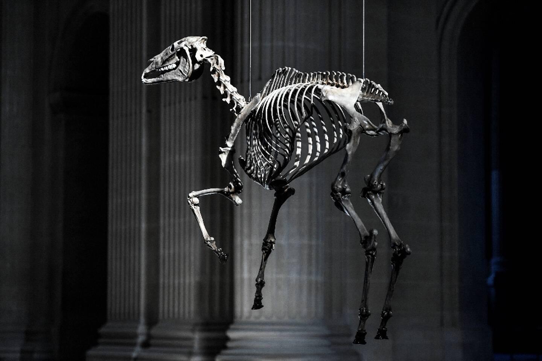 Une reproduction en 3D du squelette du cheval préféré de Napoléon, Marengo, de l'artiste Pascal Convert, suspendue au-dessus du tombeau de Napoléon aux Invalides, le 7 mai 2021 à Paris