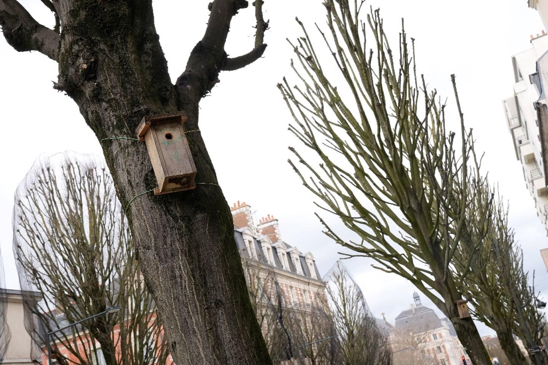 Un nichoir sur un arbre à Rennes, le 26 mars 2021