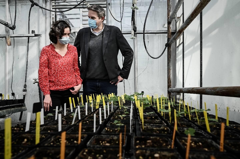 Stéphanie Cluzet, professeur à l'Institut des Sciences de la Vigne et du Vin et Nicolas Gaume, président de la La start-up Space Cargo Unlimited à Villenave-d'Ornon, en périphérie de Bordeaux, le 1er mars 2021