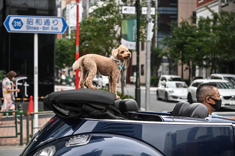L'énorme consommation de viande par un chien de taille moyenne a un impact sur la planète deux fois supérieur à celle d'un SUV conduit sur 10.000 km, concluait un livre paru en 2009