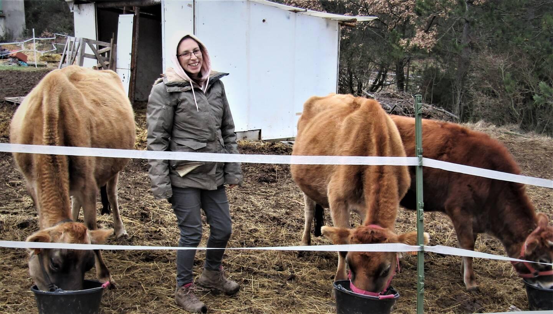 Wendy Marchand avec ses vaches de race jersiaise.
