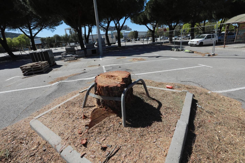 Les arbres qui présentaient un risque pour les personnes et les biens ont été abattus. Les pins parasols de la travée centrale (au second plan) ne présentant pas de risque seront conservés.