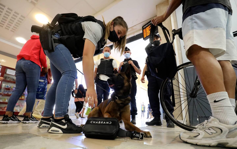 Prestone, chien de recherche, a « marqué » devant une sacoche. Billets ou produits stupéfiants s'y trouvent donc forcément…