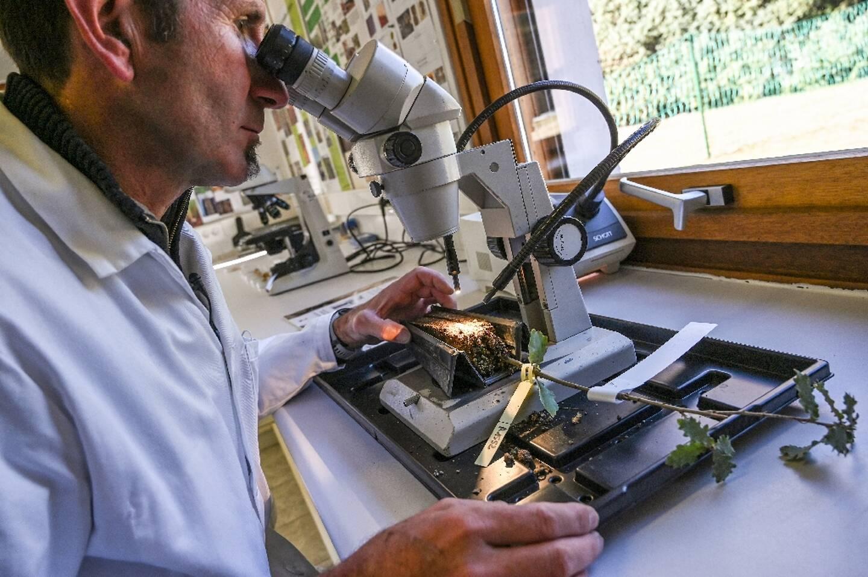Pierre Cammalletti, directeur technique du programme de mycorhization, observe au microscope les spores de tuber magnatum, le 25 février 2021, dans le laboratoire de la pépinière Robin, à Saint-Laurent-du-Cros