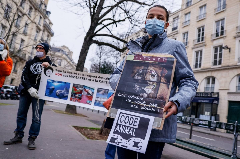 Des membres du Parti animaliste et d'associations comme One voice et L214 manifestent le 26 janvier 2021 près de l'Assemblée nationale à Paris