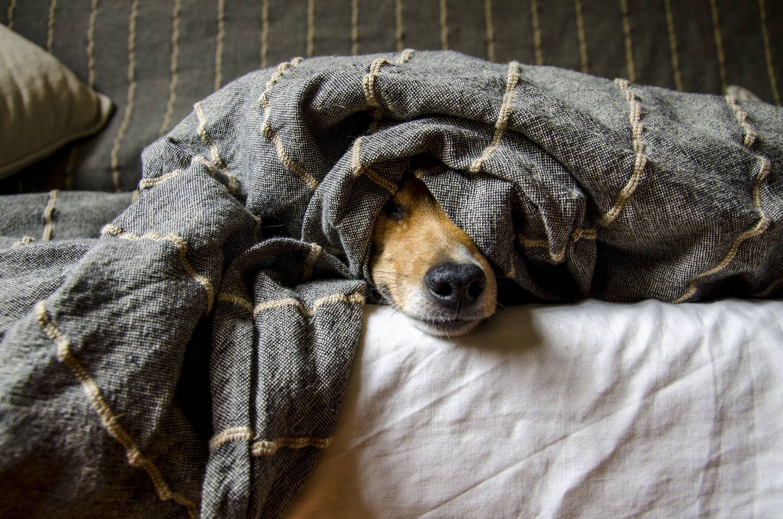 En France, on dénombrait en 2020, 7,5 millions de chiens.