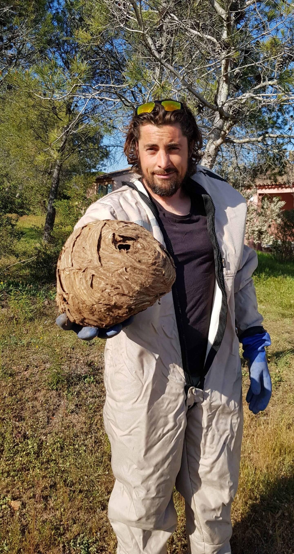 Victoric Bailleul brandit un nid de frelons asiatiques desséché par l'hiver et les pluies.