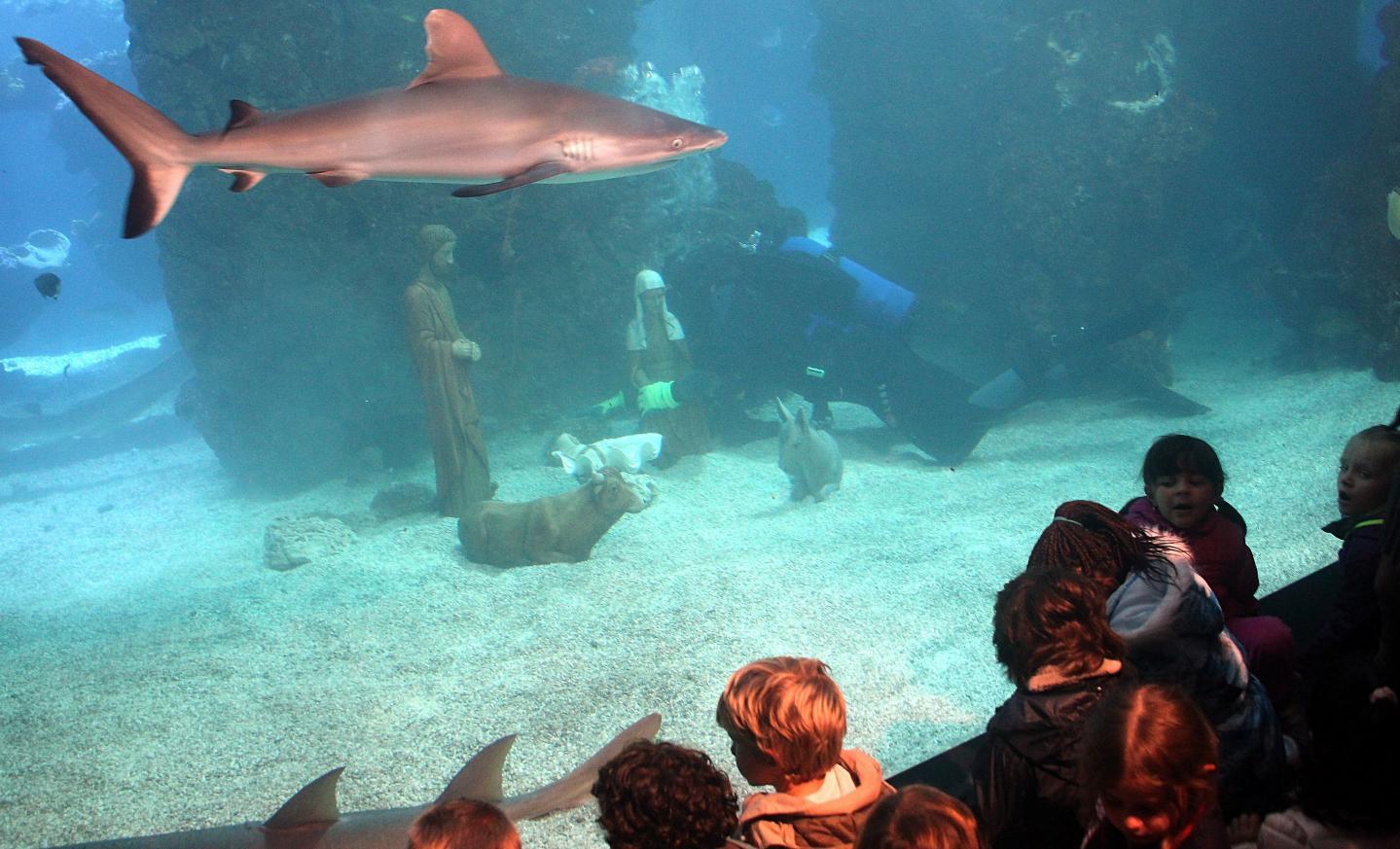Les requins de l'acquarium du Musée Océanographique devront cohabiter jusqu'au 8 janvier avec les personnages de la crèche.
