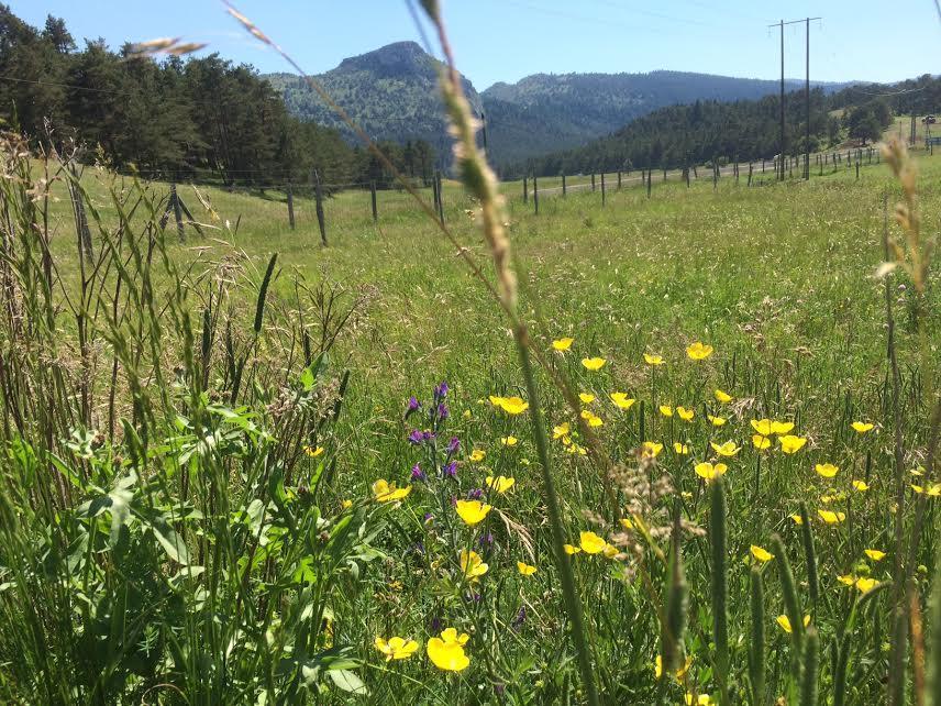 Prairie de la réserve des Monts d'Azur