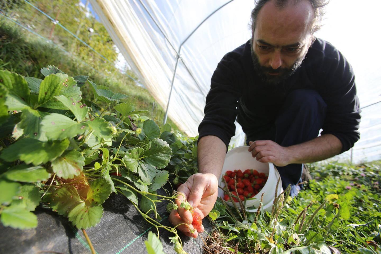 Rémi Lonjon produits fraises, framboises à La Brigue.