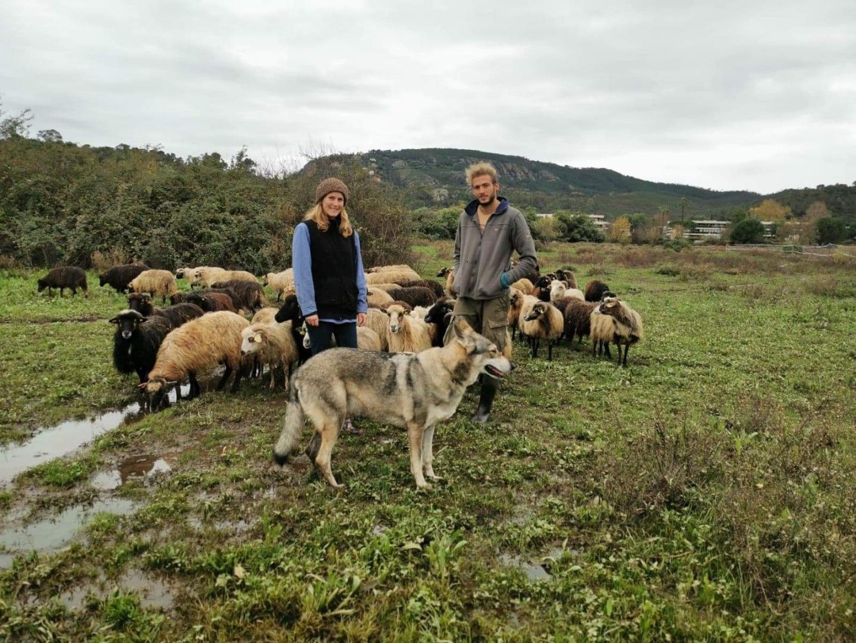 Adeline et son compagnon ont mis moutons et chevaux à l'abri pendant les fortes pluies.