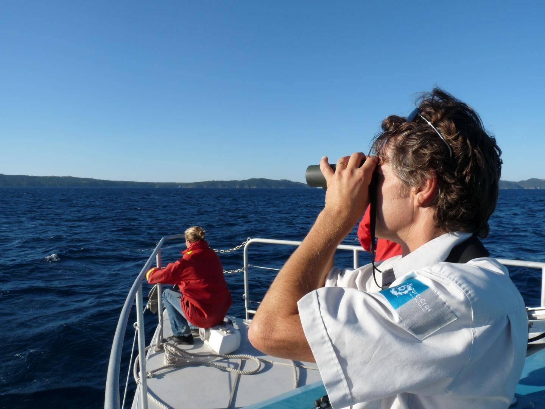 Thierry Houard, référent du milieu marin au parc national de Port-Cros, effectue régulièrement des recensements des cétacés au large des côtes varoises, en particulier entre les îles d'Hyères, du Levant et Le Lavandou.