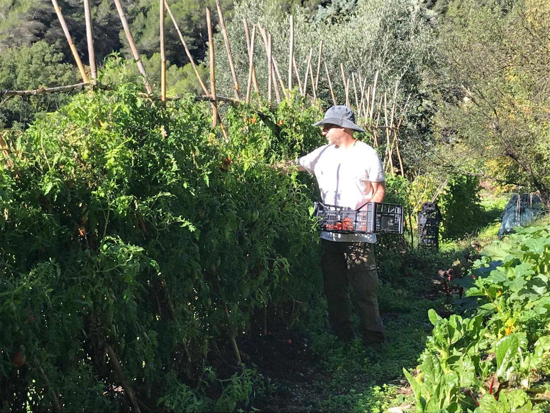 """Michael Gauci: """"l'association permet à des maraîchers qui n'ont pas de terre, qui ne viennent pas de familles d'agriculteurs, d'accéder à du foncier."""""""