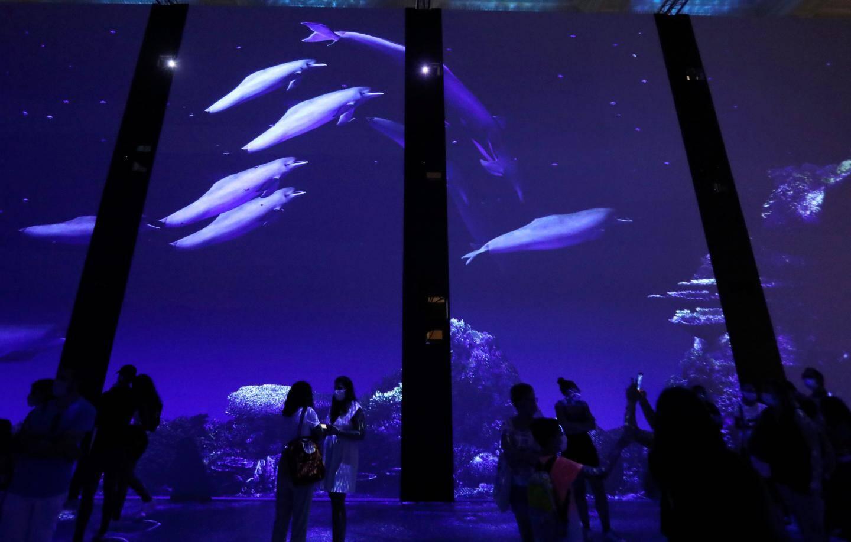 """L'exposition """"Immersion"""" permet au public de découvrir virtuellement dans l'un des plus grands écosystèmes coralliens de la planète: la Grande Barrière de Corail."""