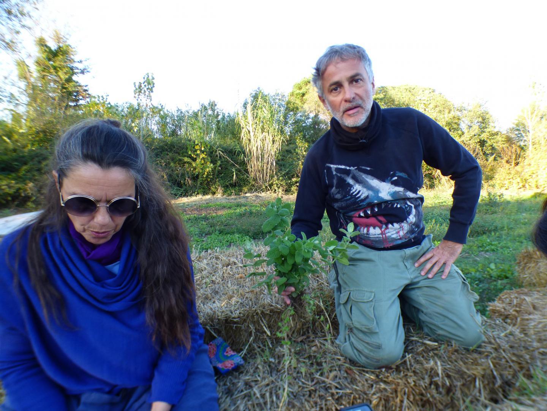 Grâce au compost, de nombreuses herbes ont poussé et certaines sont déjà comestibles.