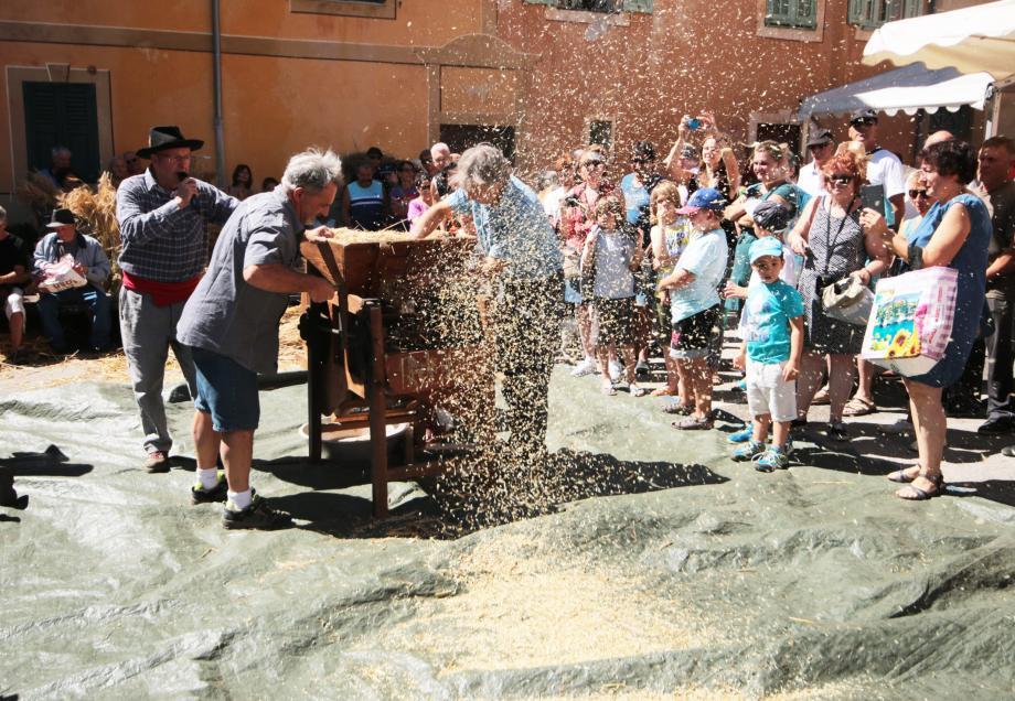 Le battage des gerbes de blé sur la planche appelée « picaïre » dans le dialecte local.