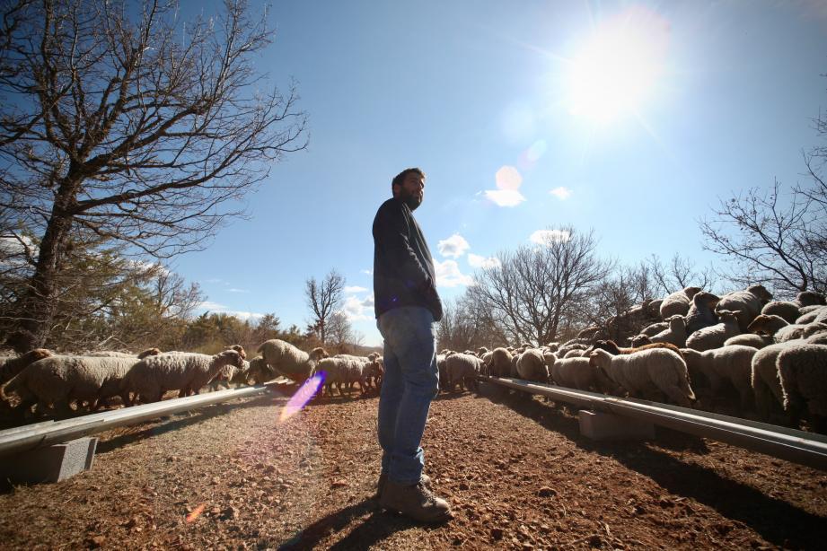 """Les éleveurs de Canjuers ont décidé de se mobiliser pour trouver """"de nouvelles solutions"""" face aux attaques du loup."""