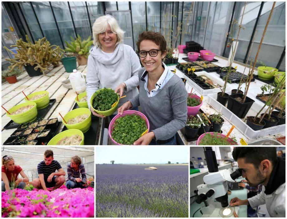 Justine Lipuma et Christine Poncet misent sur les synergies naturelles entre les plantes et des micro-organismes présents dans le sol.